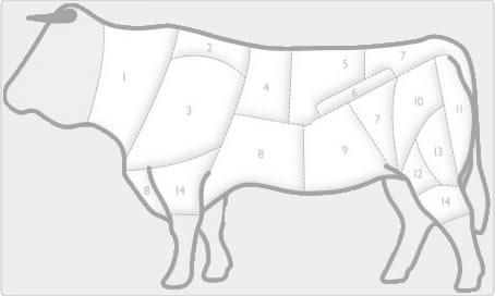 beef anatomy
